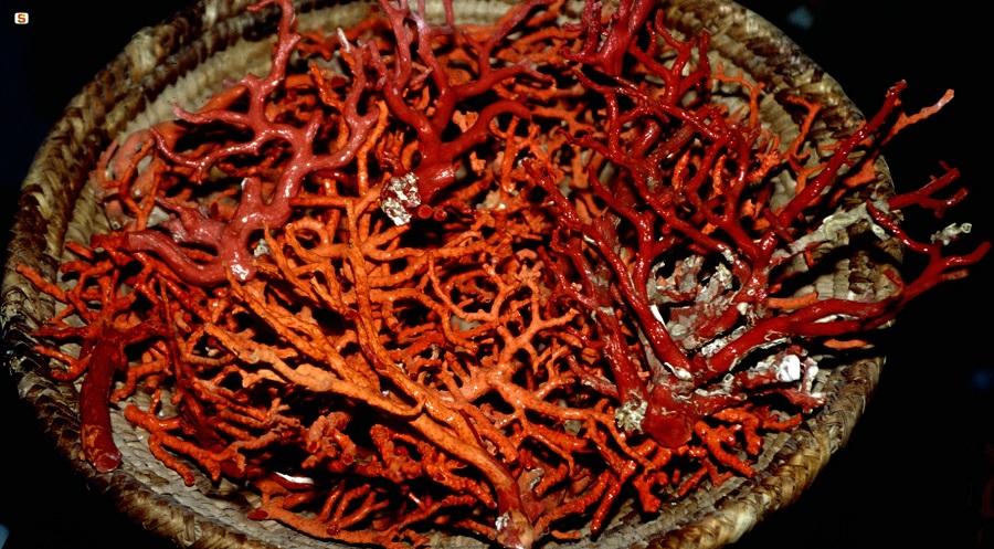 Alghero, corallo: coordinamento ed unità di sforzi per la valorizzazione dell'oro rosso