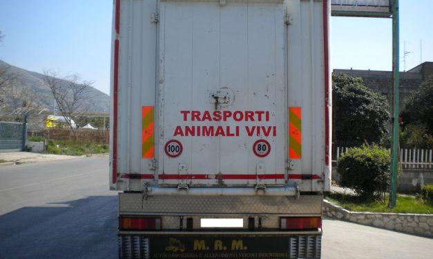 AUTOTRASPORTO–Trasporto animali vivi, corso di Confartigianato per formazione addetti settore